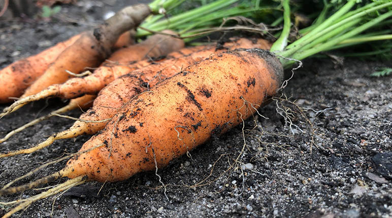 DIRECT POTAGER