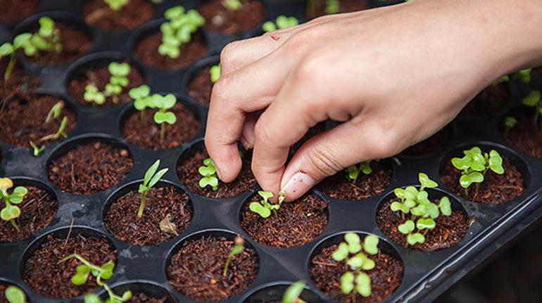 plants et semis