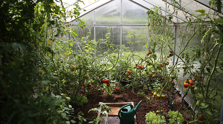 Vendre produits légumes jardin potager Législation