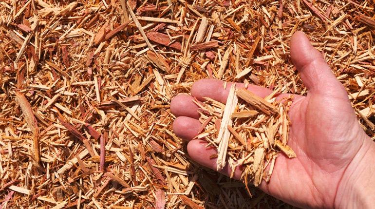 5 paillis organiques faciles à trouver