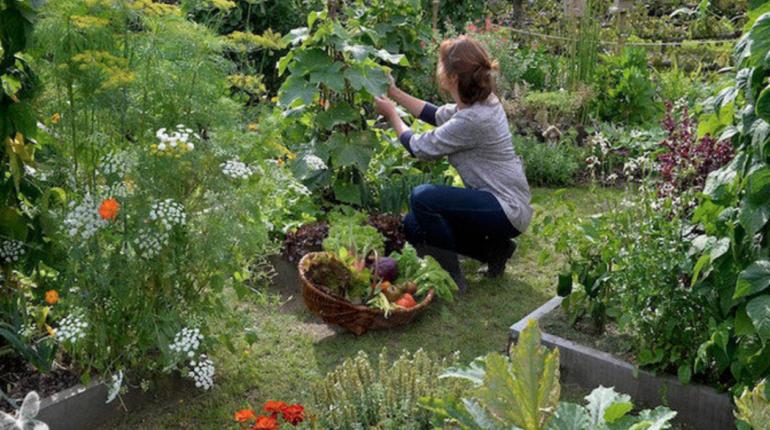 Jardin potager direct producteur