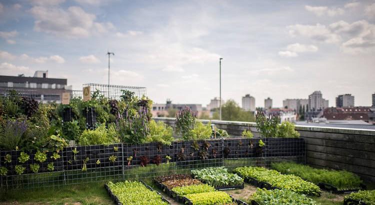 jardin-potager-ile-de-france