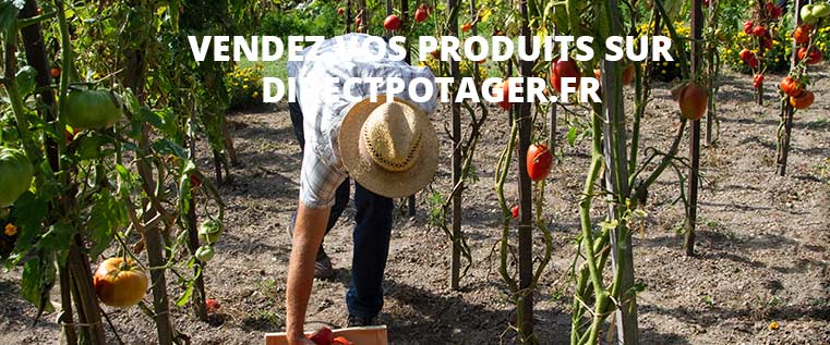 vendre légumes et fruit