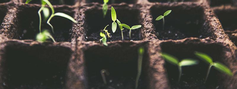 Semis et plants